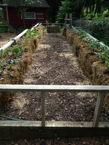 Why We Use Straw Bale Gardening My Healthy Beginning