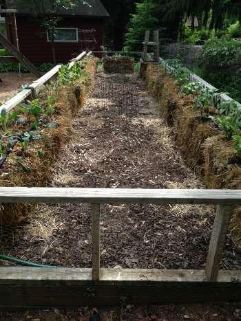 Why we use straw bale gardening my healthy beginning for Straw bale gardening joel karsten